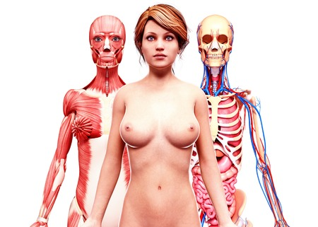 mammary: Female anatomy,artwork