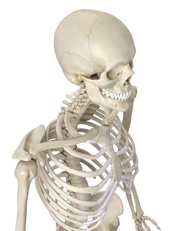 thorax: Human thorax, artwork LANG_EVOIMAGES