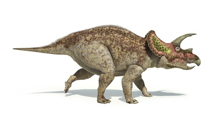 full length herbivore: Artwork of a triceratops dinosaur against a white background LANG_EVOIMAGES