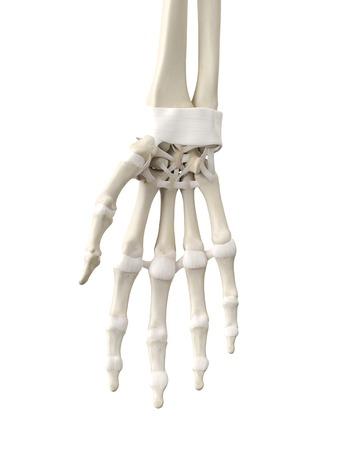 proximal: Human hand tendons, artwork