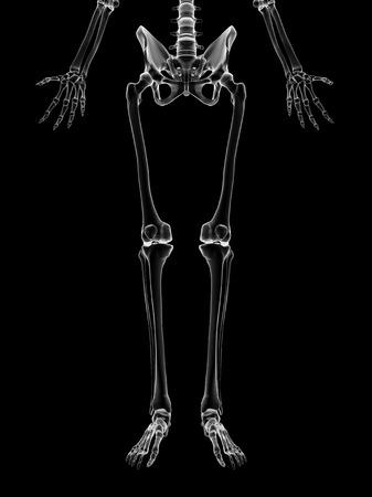 Human Leg Bones, Artwork Stock Photo, Picture And Royalty Free Image ...