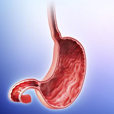 esofago: Estómago humano, ilustraciones LANG_EVOIMAGES