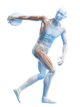 discus: Male musculature, artwork