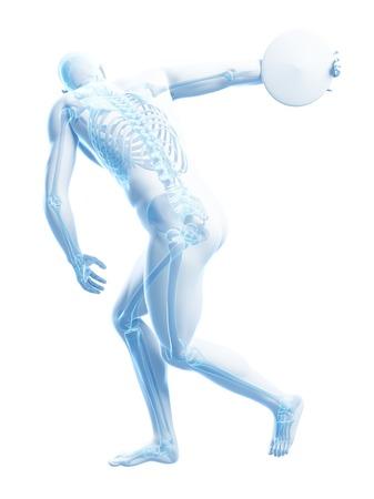 discus: Male skeleton, artwork