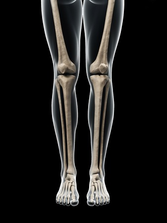 Leg anatomy, artwork