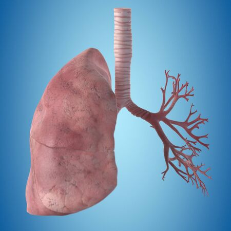 respiration: Human lung, artwork