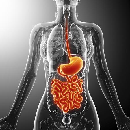 esofago: Sistema digestivo humano, obras de arte