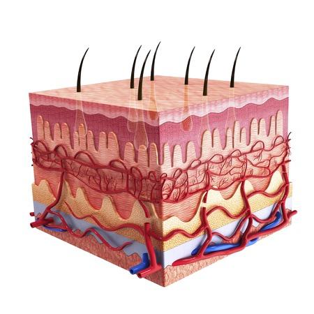 Human skin, artwork