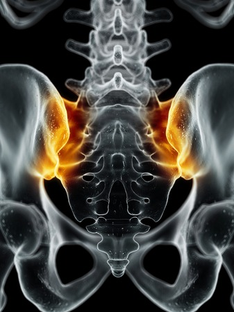 Human sacroiliac joint, artwork