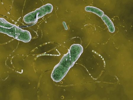 ehec: Artwork of the EHEC (enterohaemorrhagic Escherichia coli) bacteria