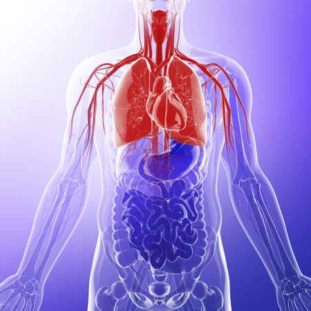 Human lungs, artwork