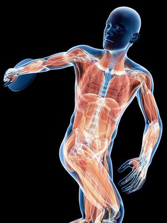musculature: Male musculature, artwork