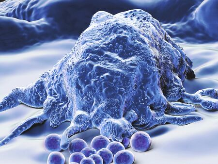macrophages: Artwork of a macrophage