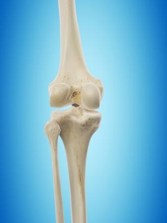 Human knee joint, artwork LANG_EVOIMAGES
