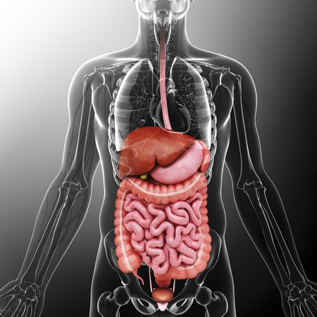 esophageal: Human internal organs, artwork