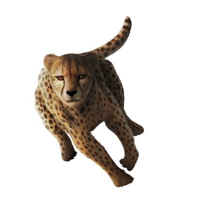Artwork of a cheetah (Acinonyx jubatus)