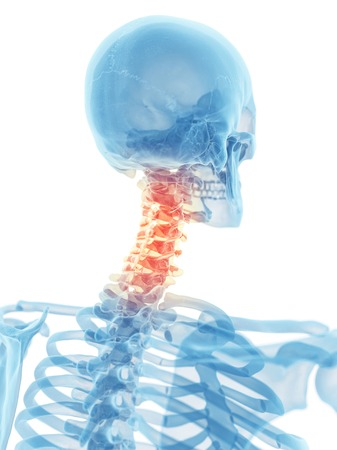 Human Neck Bones Artwork Stock Photo Picture And Royalty Free