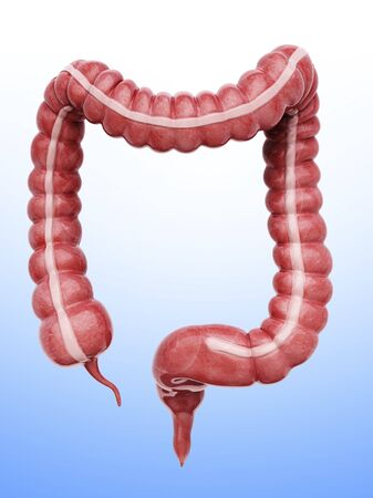 descending colon: Large intestine, artwork