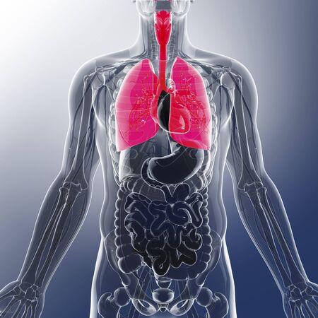 esofago: Los pulmones humanos, obras de arte