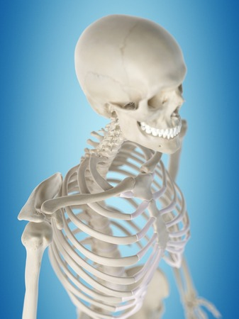 Human thorax, artwork LANG_EVOIMAGES
