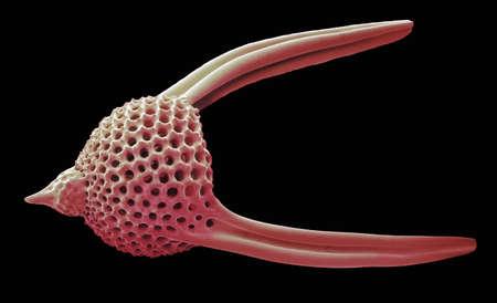 plancton: Lychnocanoma radiolarian, SEM LANG_EVOIMAGES