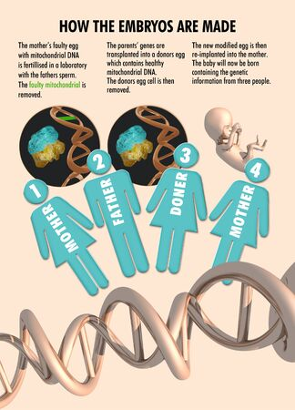 bioethics: Infographic showing the process of three parent IVF (in vitro fertilisation) treatment LANG_EVOIMAGES
