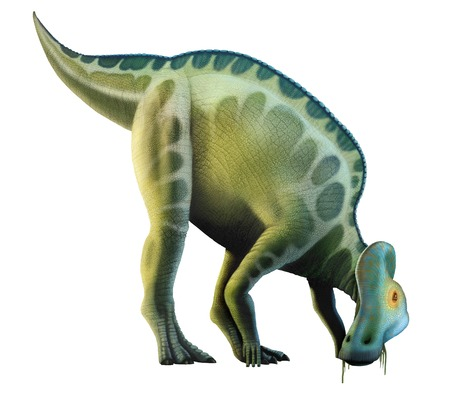 crested duck: Corythosaurus is a genus of hadrosaurid (i.e. duck-billed) dinosaurs, planet eaters, that lived in what is now North America towards the end of the Cretaceous period, roughly 75 millon years ago. The name comes from the crest on its head, which suggeste