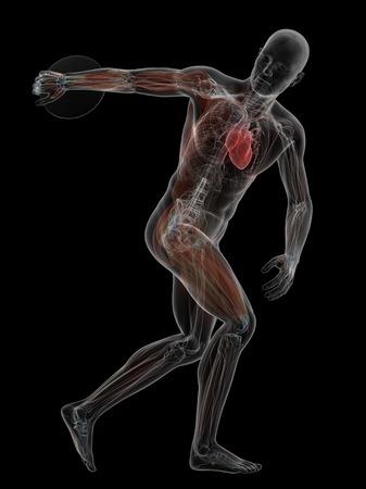 discus: Male anatomy, artwork
