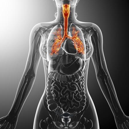 Human throat, artwork