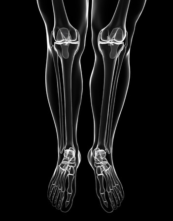 Human leg and foot bones, computer artwork