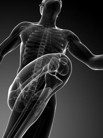 Human anatomy running, computer artwork