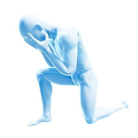 Human anatomy, illustration