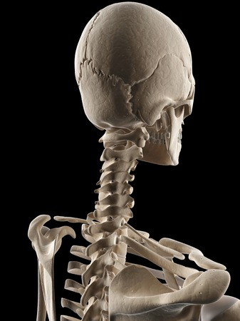 Human Neck Bones Illustration Stock Photo Picture And Royalty Free