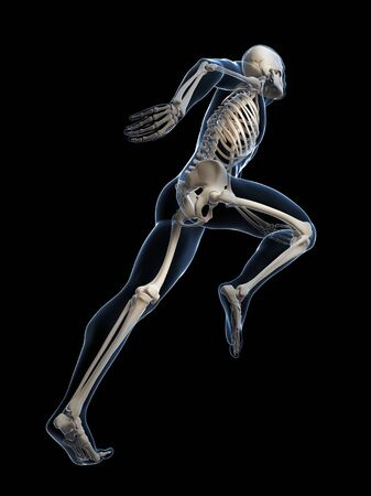 Skeletal system of a runner, computer artwork LANG_EVOIMAGES