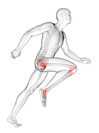 Human Anatomy Of A Runners Joints Computer Artwork Stock Photo