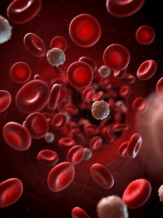 bloodstream: Red and white blood cells, illustration LANG_EVOIMAGES