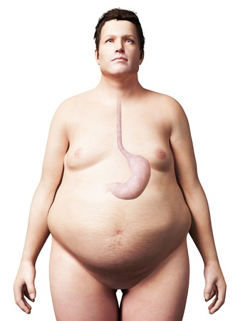 Stomach of overweight man, illustration