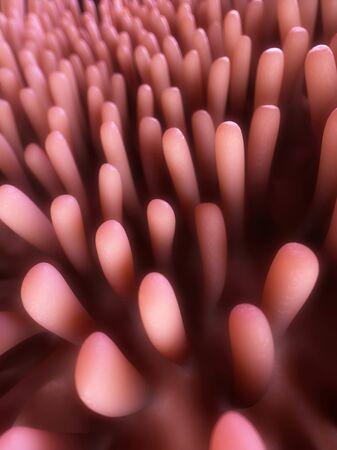 Human intestinal lining, illustration