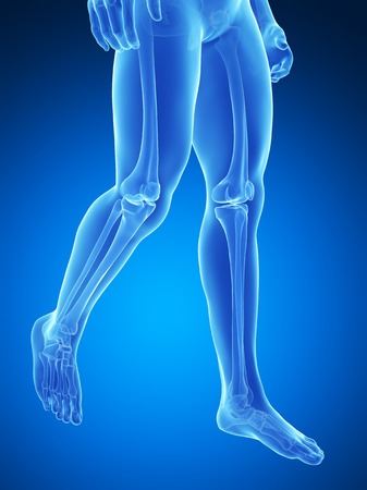 Human Leg Bones, Illustration Stock Photo, Picture And Royalty Free ...