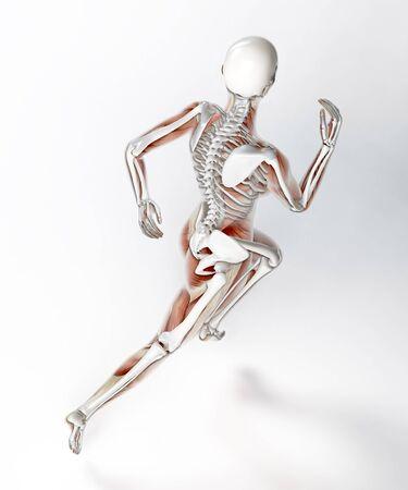 Skeleton of a female runner, computer artwork