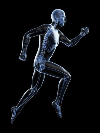 Skeletal system of a runner, computer artwork LANG_EVOIMAGES