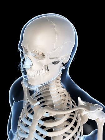 Human skull and neck, computer artwork LANG_EVOIMAGES