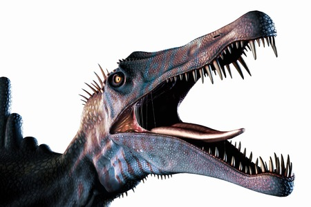 Spinosaurus (meaning spine lizard) was arguably the largest known meat-eating dinosaur. It was longer even than Tyrannosaurus and Giganotosaurus at, according to one estimate, up to 18m in length. Named for the elongated spinal bones that make up the cu
