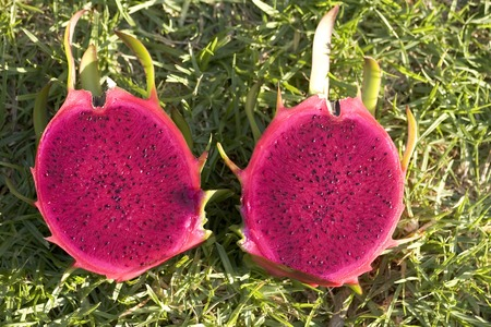 Pitaya (AKA dragon fruit) LANG_EVOIMAGES