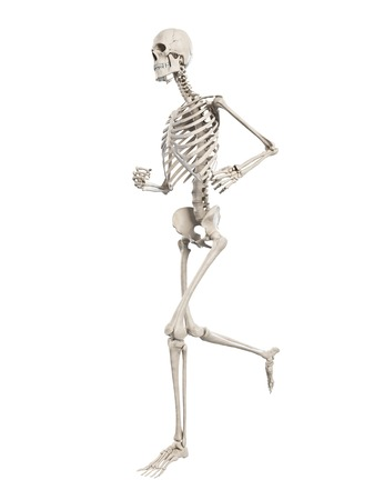 Human Skeletal System Illustration Stock Photo Picture And Royalty