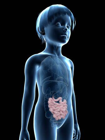 small intestine: Intestine of boy, illustration
