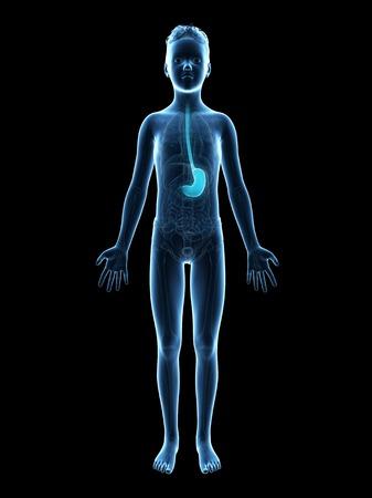 esofago: Estómago de un niño, ilustración