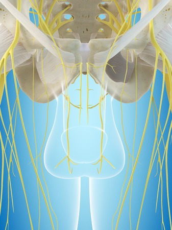 testes: Male nervous system, illustration LANG_EVOIMAGES