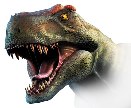 Tyrannosaurus rex, head study. This dinosaur lived in North America and Asia from about 70 million years ago until the extinction of the dinosaurs some 5 million years later. The head is heavily built, to withstand impacts with prey animals, and has the s LANG_EVOIMAGES