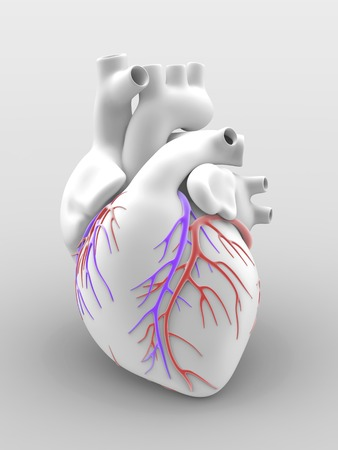 vena: Heart and coronary arteries, artwork LANG_EVOIMAGES